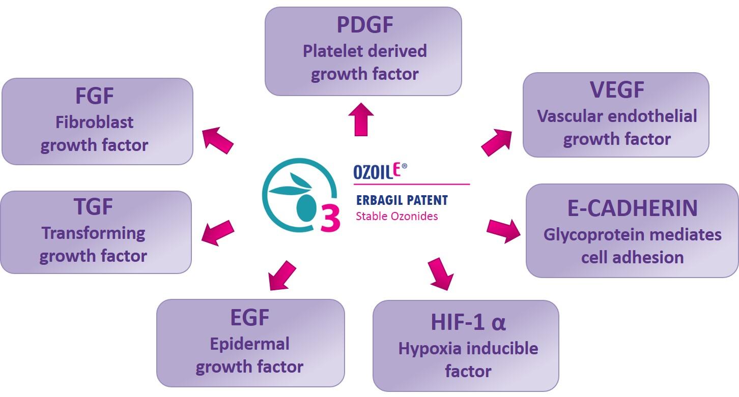 fattori di crescita inglese.jpg